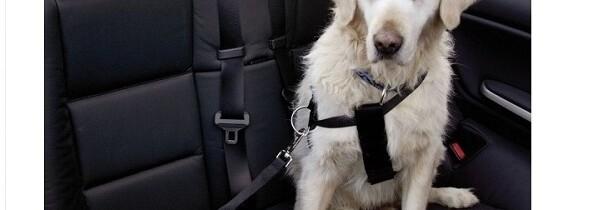 Consejos para Viajar con su Mascota